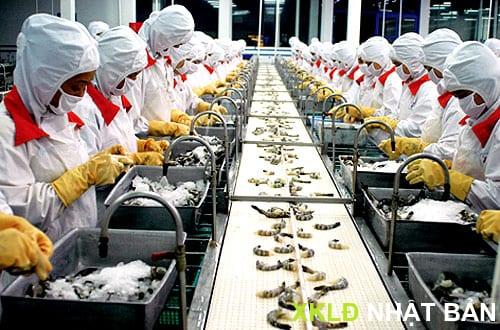 [XKLD Nhật Bản] Đơn hàng chế biến thực phẩm 1 năm 18